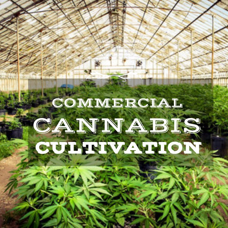 Commercial Cannabis Cultivation Could Be Boon for Oceanside